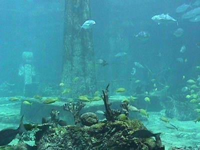 Indonesia adalah Benua Atlantis yang Hilang